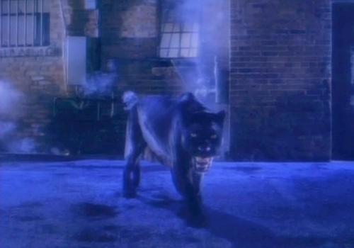 pantherdance2
