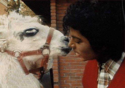 Louie Llama